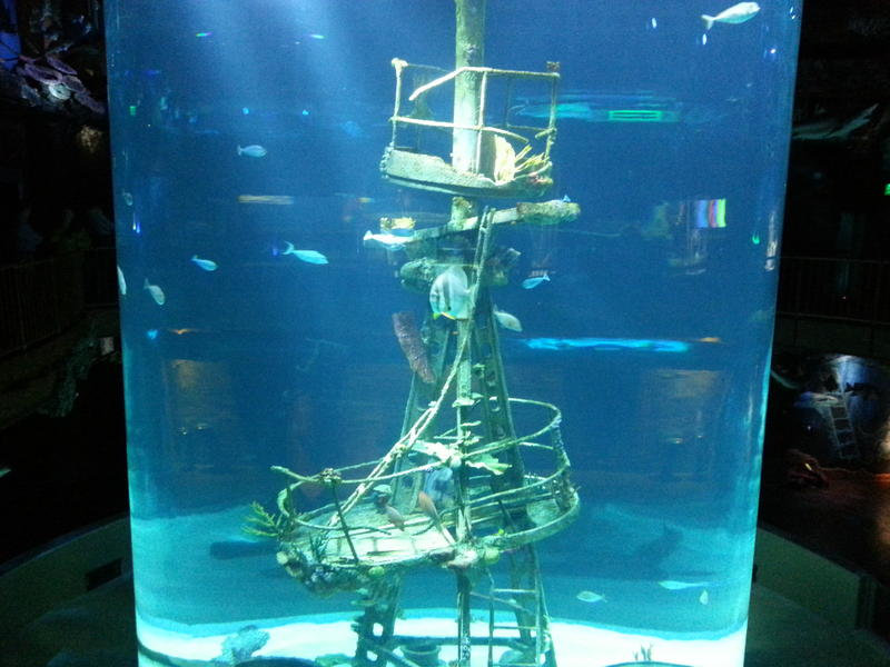 A shipwreck aquarium highlights one of the galleries of the America's Wildlife Museum and Aquarium. The entire complex will open next spring.