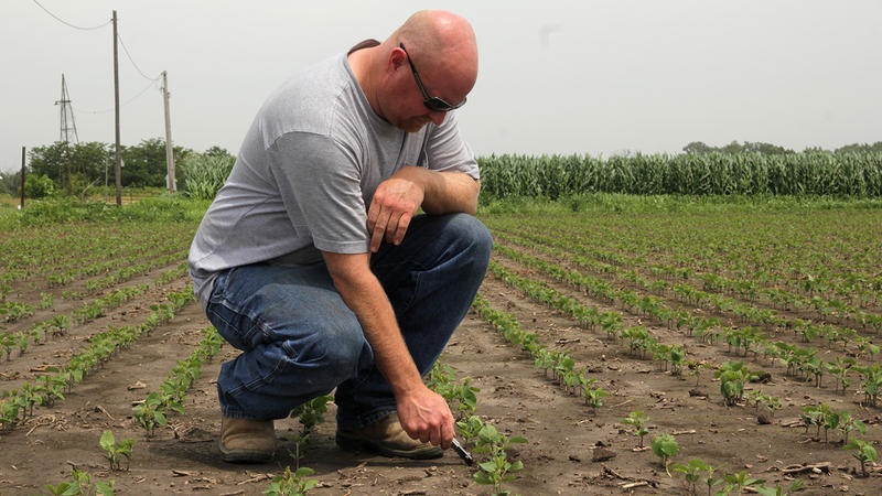 By the end of June, This year, Matt Plenge's Kahoka, Mo., farm has received close to four times its normal rainfall