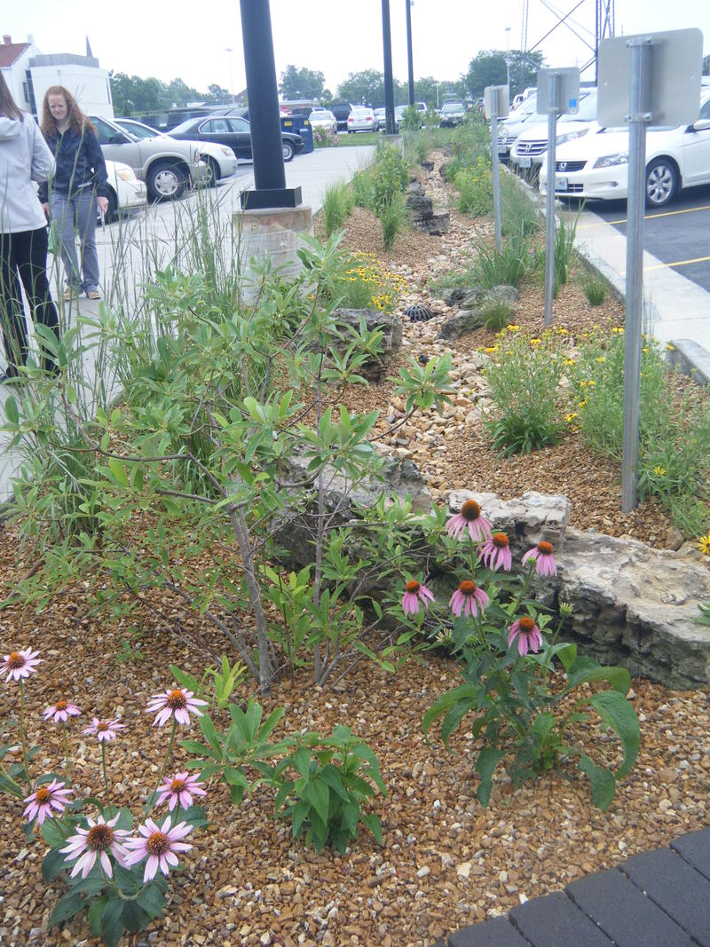 Bio-swale in the center of the Government Plaza parking lot.