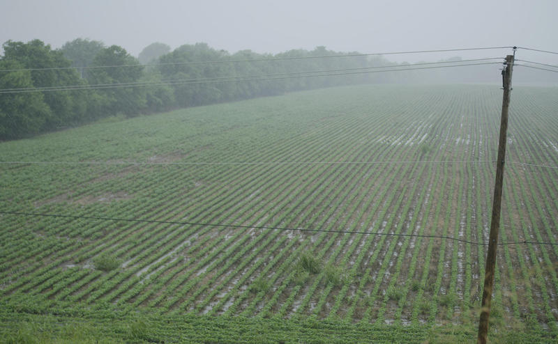 A saturated field west of Springfield due to heavy rains in early July.