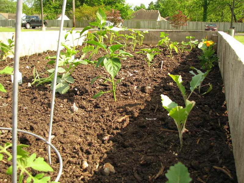 Community Garden at Ray Kelly Park