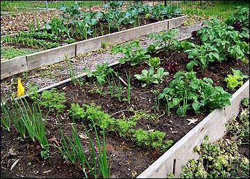 MU Extensions Garden