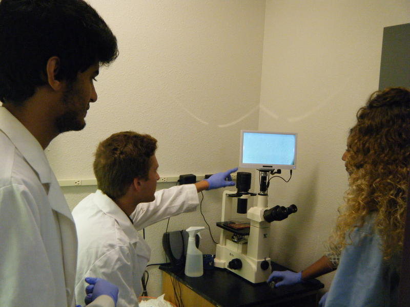 Students in the lab looking at colon cells