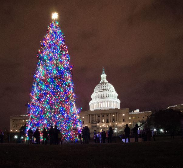 Capitol Christmas Tree.U S Capitol Christmas Tree To Stop In Springfield Ksmu Radio