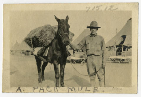 Pack Mule used to carry ammunition and dynamite in WWI