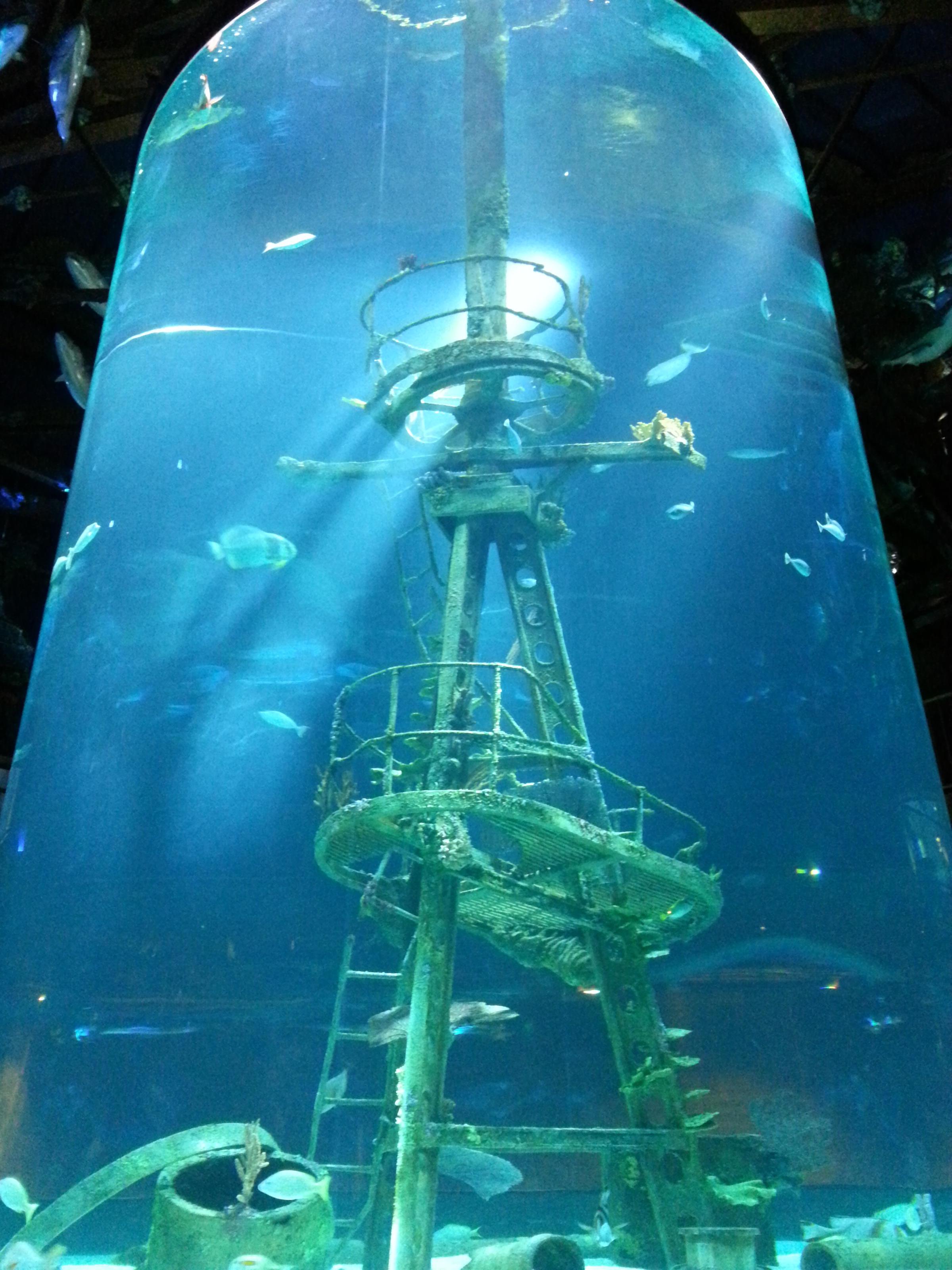 IMAGES: Officials Unveil New Details for Museum, Aquarium ...