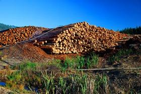 Logs at a Glendale mill in 2008.