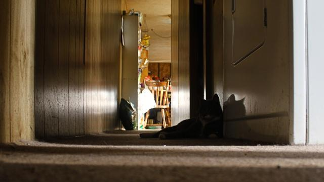 A cat lays next to the washing machine in the hall of White's single wide manufactured home. The floorboards under the carpet have rotted.