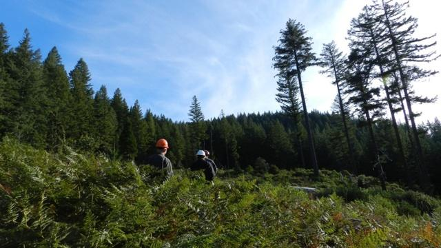 Foresters visit an old clear-cut on BLM land near Roseburg, Oregon.