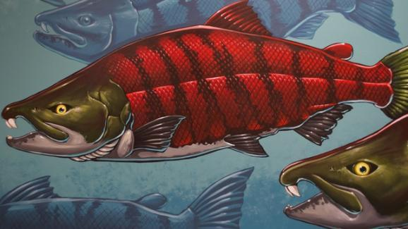 A saber-toothed salmon, as depicted by artist Ray Troll. The mural is part of the University of Oregon Museum of Natural and Cultural History.