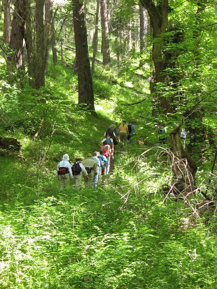 The Enchanted Forest Trail, laden with moss and greenery, makes a perfect summer hike.