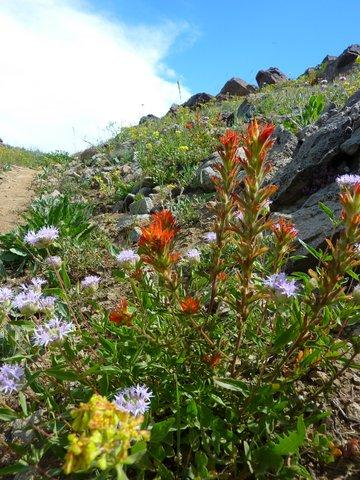 Flowers on the Silver Fork Trail, which also boasts amazing views of Mt. Shasta.