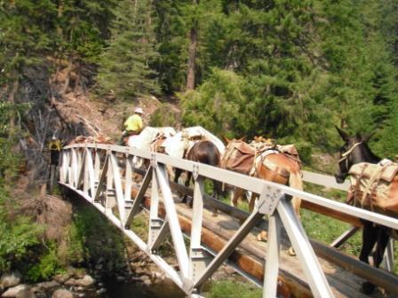 Mule Team