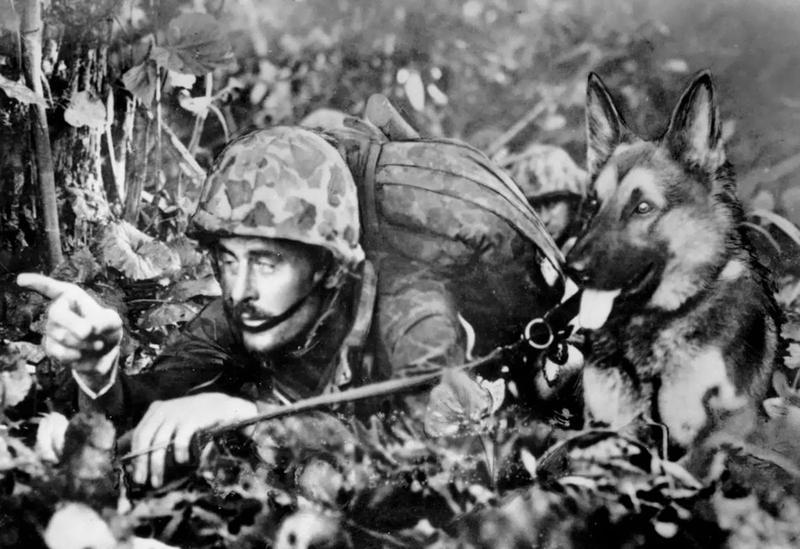 U.S. War Dog and his handler.