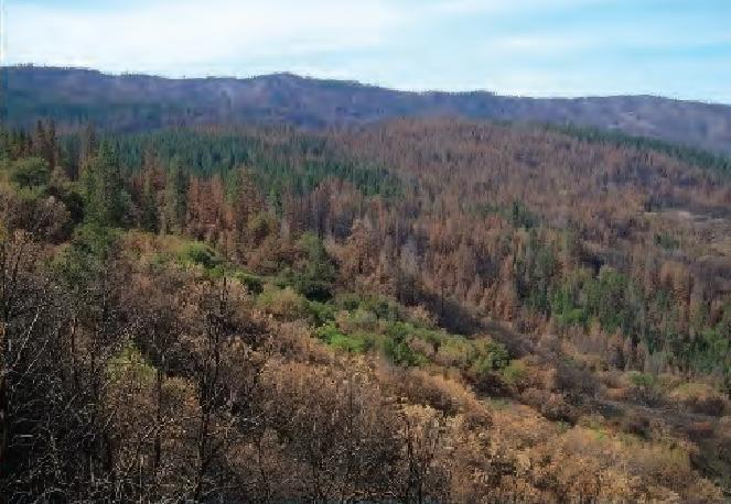 "This image from Stanislaus National Forest in northern California after the 2013 Rim fire shows how fires often burn in a ""mosaic"" pattern, with patches of mixed severity."