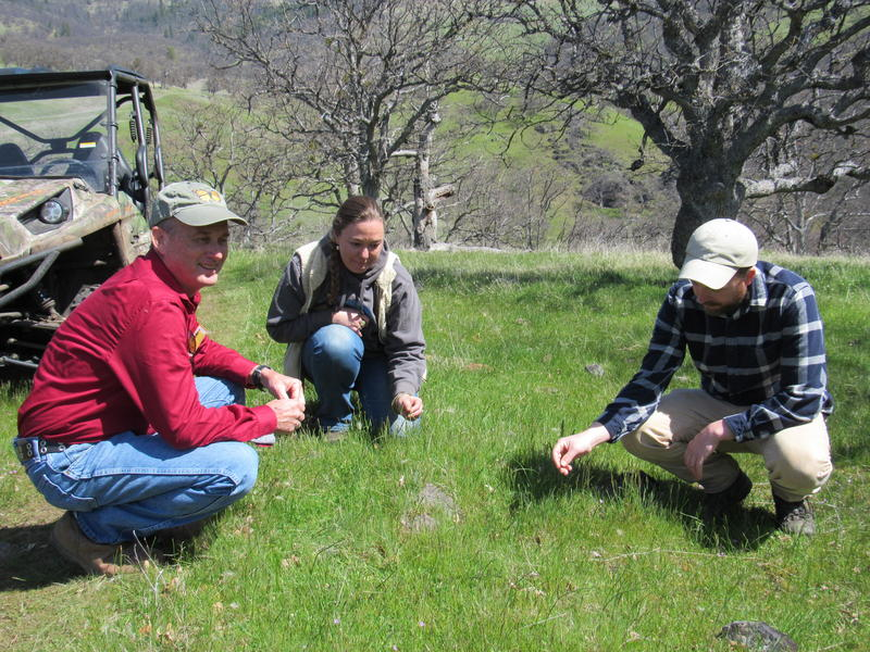 (L to R) Robert Coffan (Southern Oregon Monarch Advocates), Maia Black (Selberg Institute) and Sean Prive (Lomataksi) examine some wildflowers on the Sampson Creek Perserve.