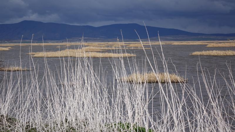 Tulelake Refuge marsh