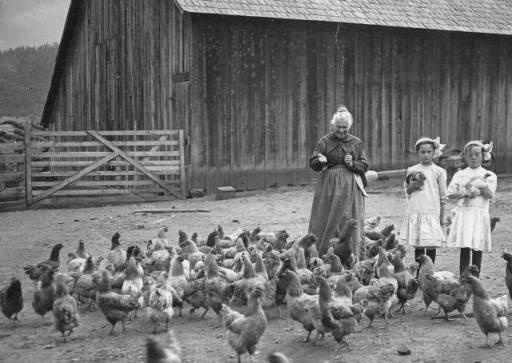Sarah Ann Slagle McKay feeds chickens with her granddaughters on a farm near Central Point, circa 1910. This image is part of the Stories of Southern Oregon Collection in the Southern Oregon University Hannon Library digital archives.