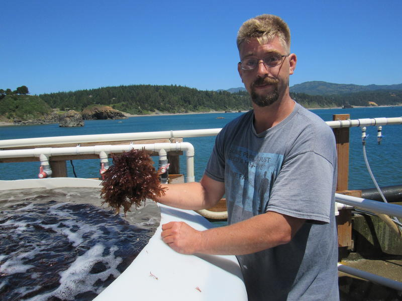 James Weimar, with Oregon Sea Farms, holds a handful of the dulse he's cultivating in tanks on the dock at the Port of Port Orford. Oregon Sea Farms is a potential tenant of the new building the Port is trying to build.