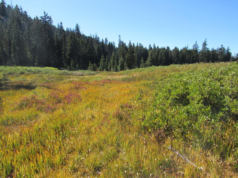 A meadow in the Big Grayback grazing allotment in Rogue River-Siskiyou National Forest. The meadow is recovering after nearly ten years of not being grazed.