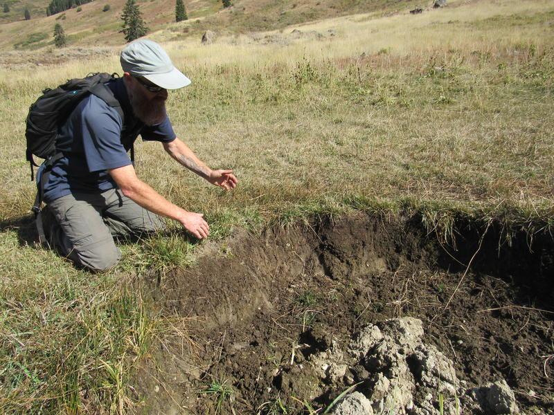 Luke Ruediger examines a wet area deeply incised by cow hoofs.