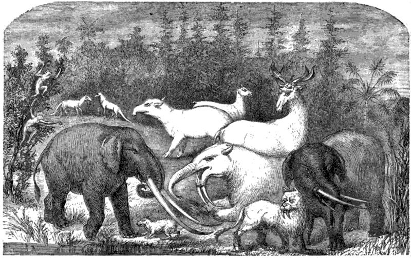 Mastodon fossils in Jackson County?