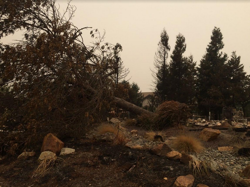 Uprooted trees in Redding show the force of the fire wind.