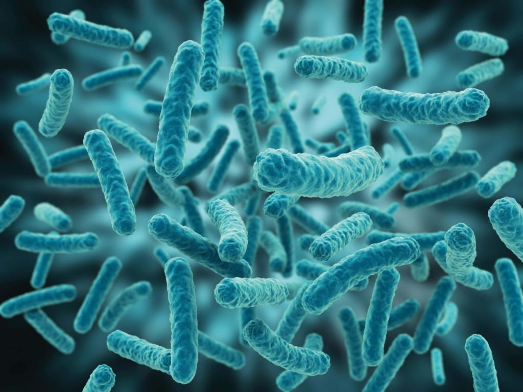 lactubacillus species The commonest species isolated was l plantarum this paper highlight the  importance of lactobacillus in the processing of african fermented foods.