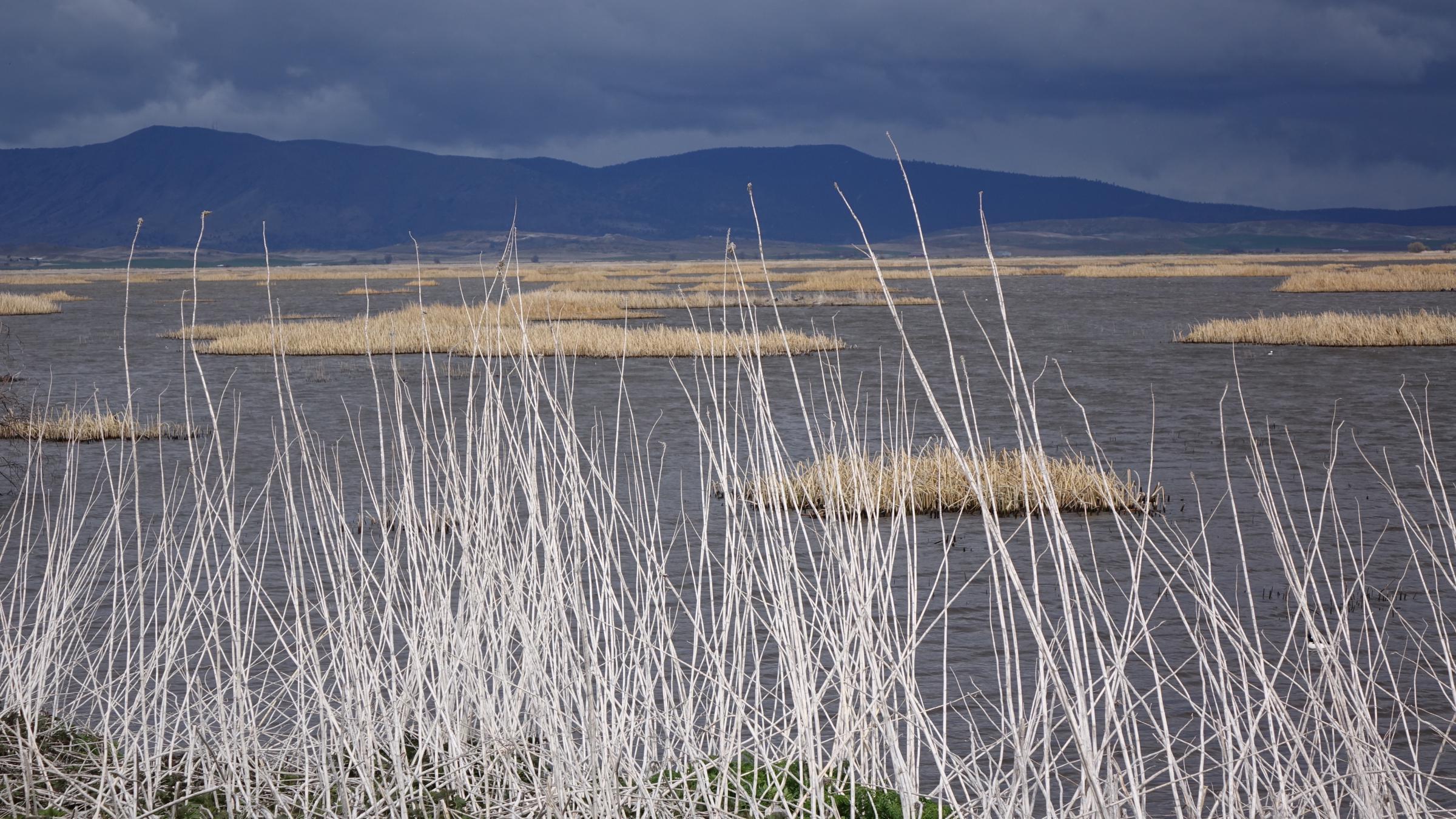 The klamath basin wildlife water in the arid west jefferson tulelake refuge marsh platinumwayz