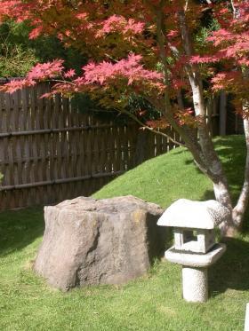 Japanese maple, lantern, meditation rock.