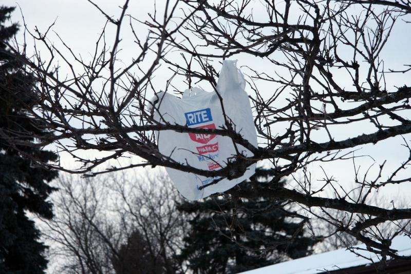 It is not uncommon to see a plastic bag stuck in a tree.