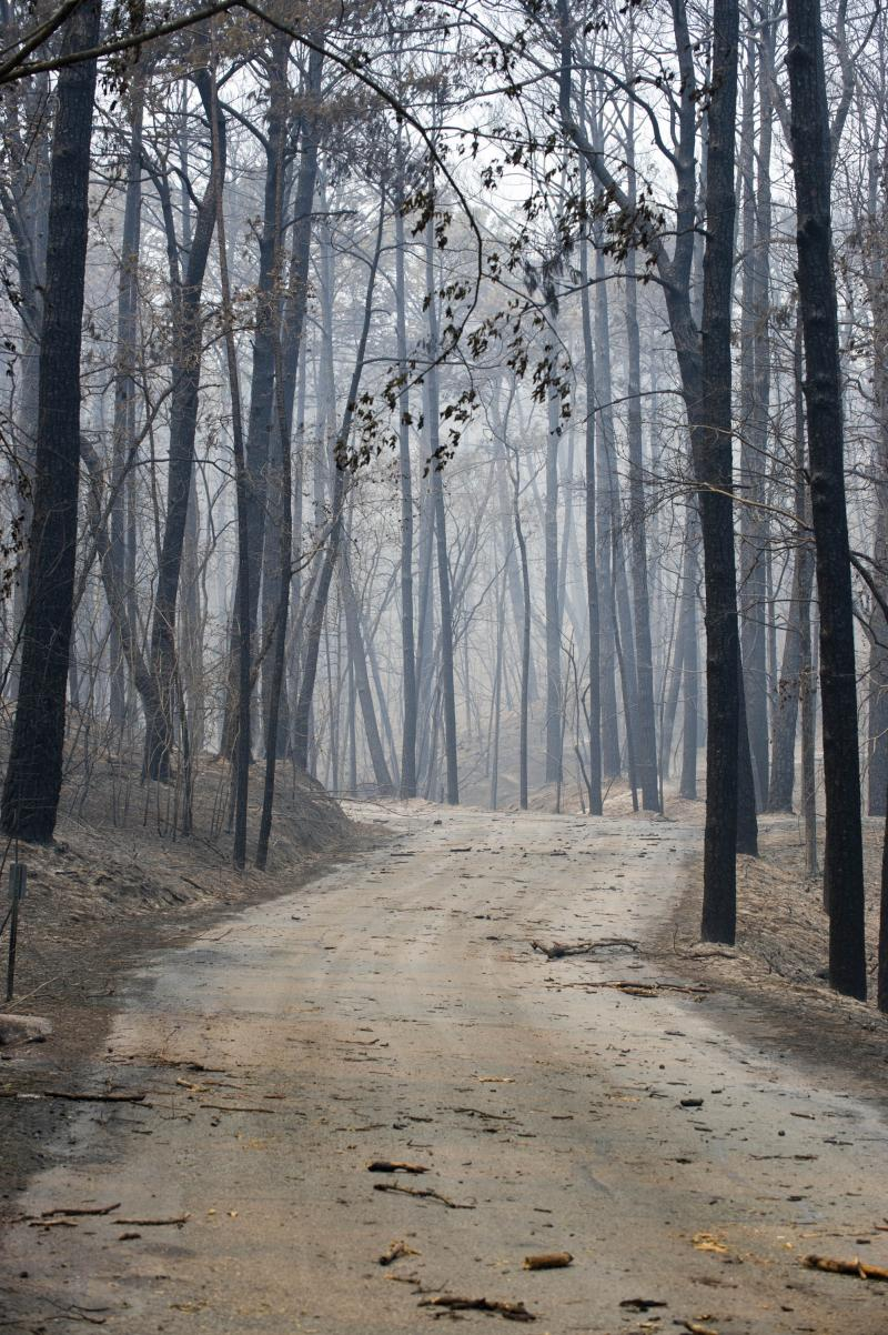 Bastrop State Park after the fire.