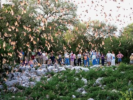 Bat Conservation International offers small groups a chance to watch millions of bats leave the Bracken Bat Cave at night in search of mosquitoes and other insects