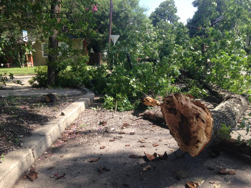 Branch from oak lies in the street after being struck by a passing truck.