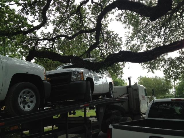 Trailer carrying AT&T trucks crashes into oak tree on Thorman Place off Broadway, knocking down large, old branch