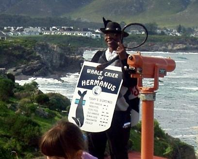 The Whale Crier announces the arrival of the magnificent beasts in Hermanus.