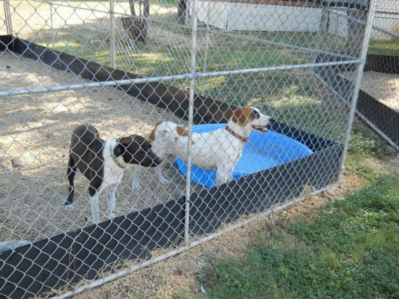 Once they get a clean bill of health, animals are placed in the main kennels at Animal Defense League, ready for adoption.