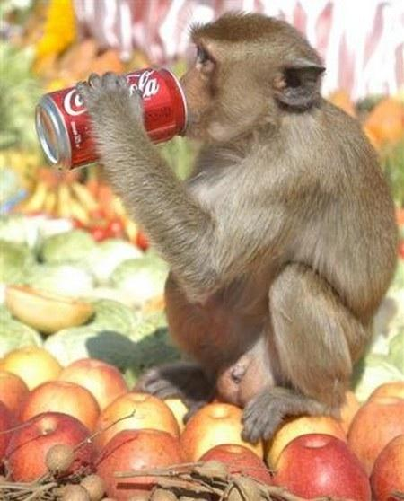 We can neither confirm nor deny the veractiy of this photo of a monkey drinking a Coke.