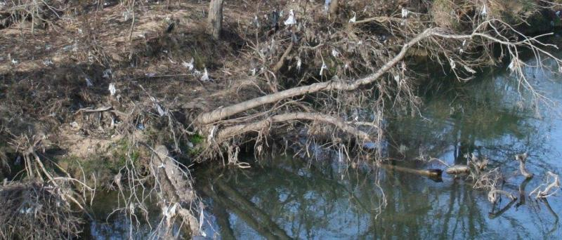 Plastic bags are a significant problem for trash along the San Antonio River. This pictures illustrates a portion of trash at Blue Wing Road near the Salado Creek confluence.