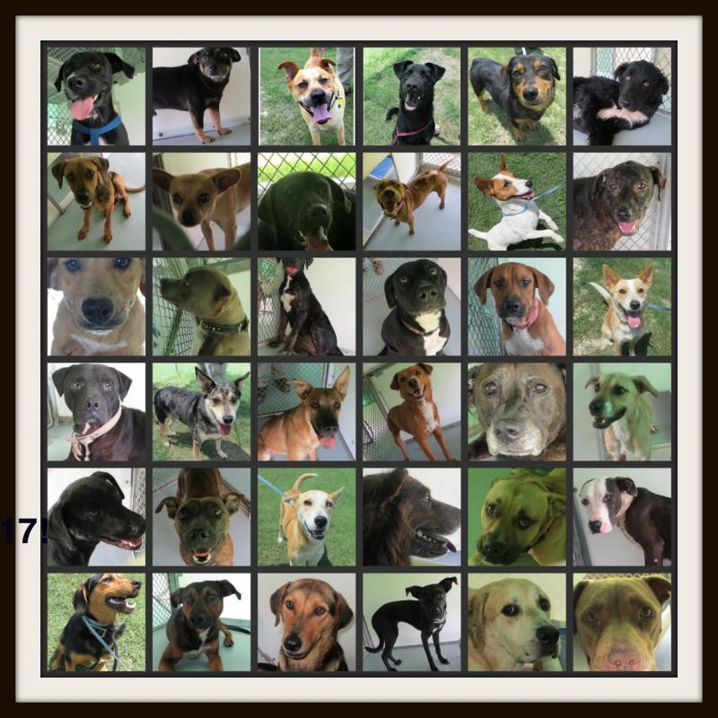 Kelly Plessala took pictures of the animals at Brooks in an effort to help them get adopted. She estimates she saved about 1,000 dogs by including their profiles on Facebook and her website.