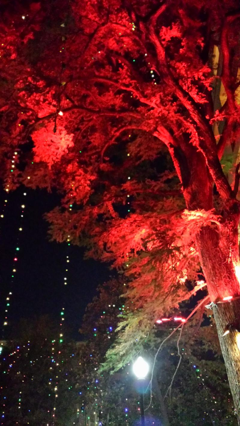 Holiday lights on the River Walk.
