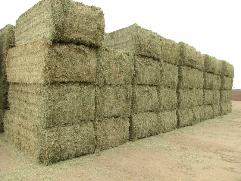 Some of Yuma County's alfalfa will go to feedlots and dairies in the region. Others will be shipped overseas to China, where the demand for hay has grown.