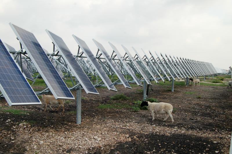 The program is a test project that, if goes well, could be put into place at OCI's other solar farm in San Antonio.