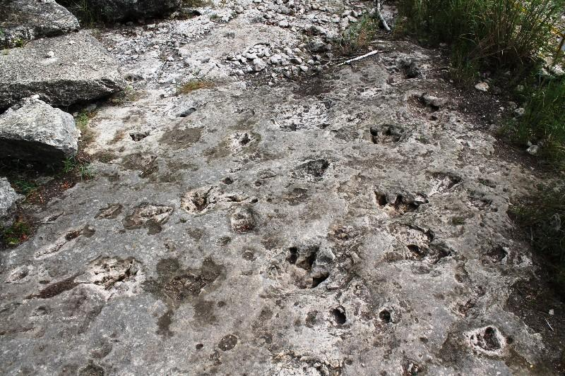 Scientists Uncover Dinosaur Tracks At Government Canyon