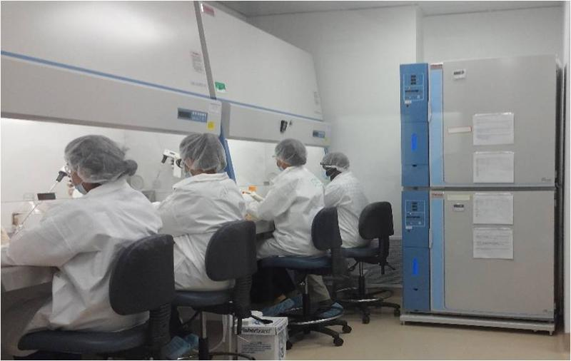 Scientists working with stem cells at StemBioSys Inc. in San Antonio