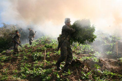 Mexican soldiers work in the mountains of Sinaloa burning this marijuana field, part of an eradication program supported by the United States.