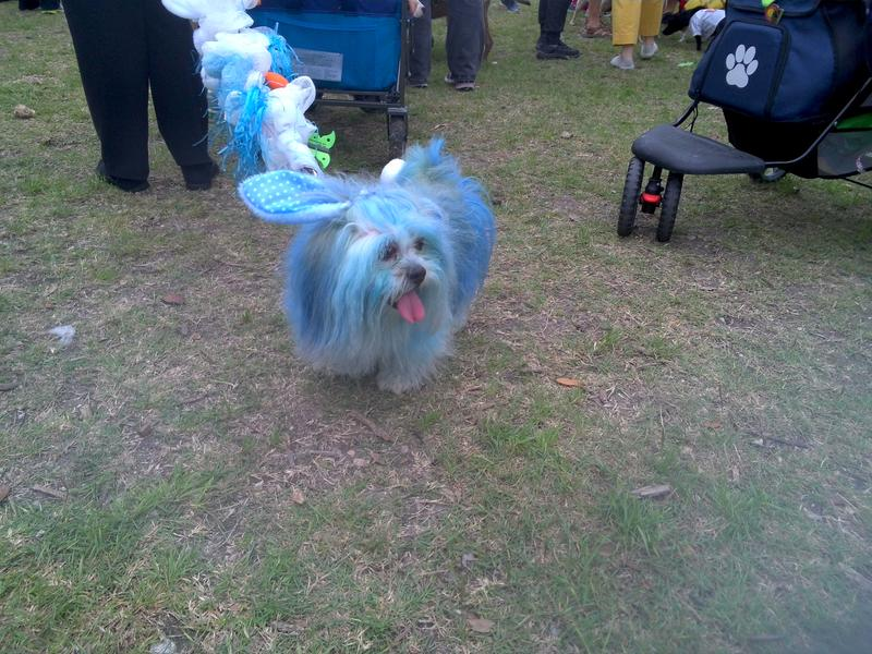 TPR joins the fun at San Antonio Parks Foundation's Fest of Tails in March 2017