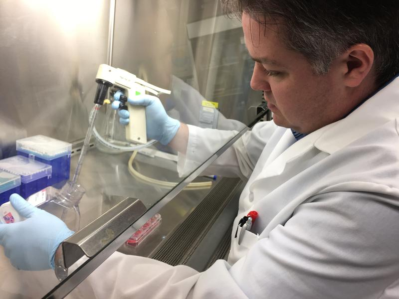Brian Hermann, Ph.D.,  works on male infertility in his lab at the University of Texas at San Antonio.