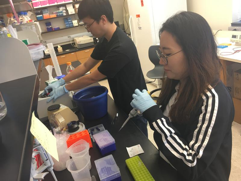 Won-Haeung Lee, visiting scholar, and UTSA neurobiology graduate Hauen Kim work with brain cells in a lab at UTSA.