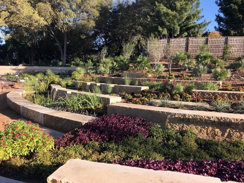 Mays Family Display Garden. San Antonio Botanical Garden. Quinoa Plants.  View Slideshow ...